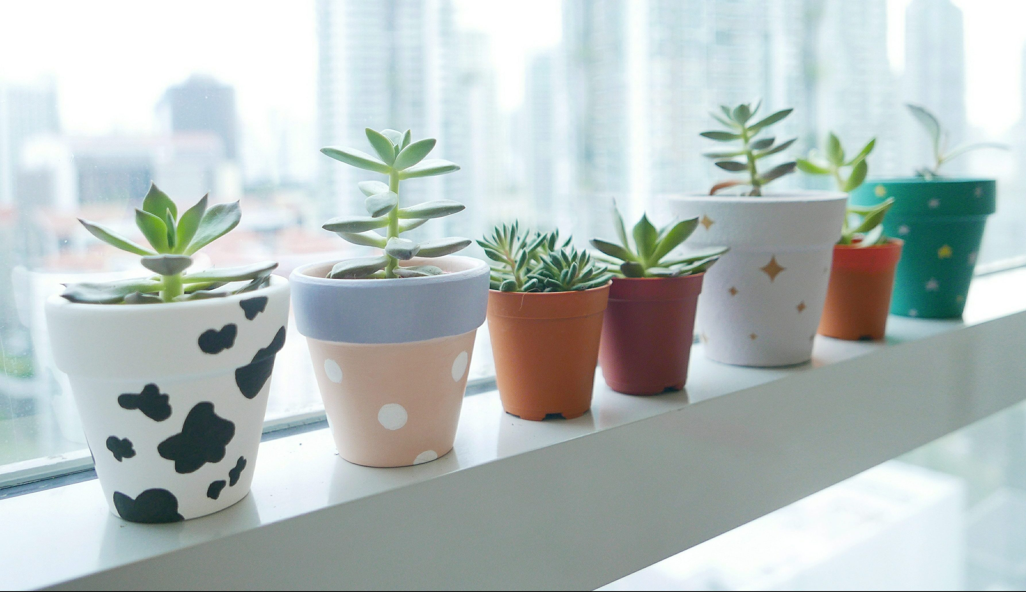 Succulents in painted pots on window sill