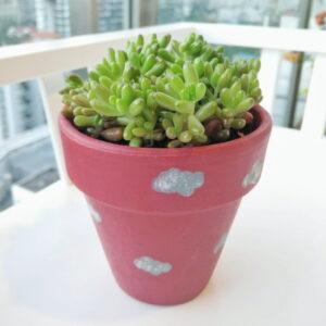 Sedum succulent in small sized Amelie pot