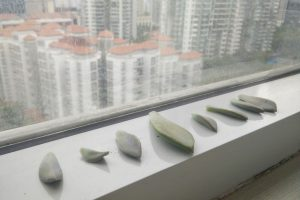 Succulent leaves drying out on windowsill