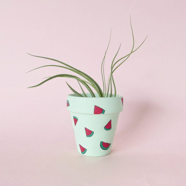 Wild for Watermelons with air plant