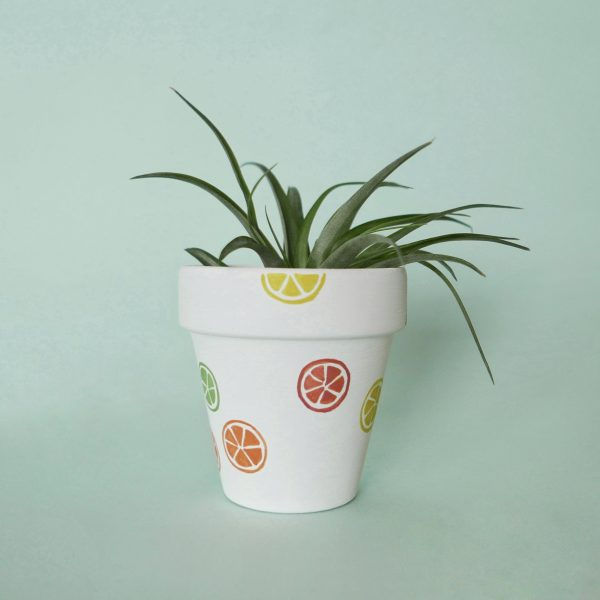 Sweet and Sour Pot with Airplant