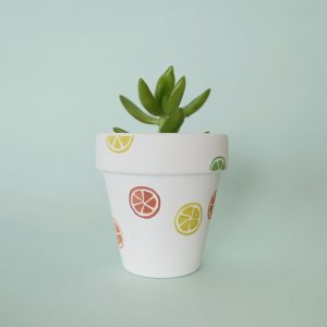 Sweet and Sour Pot with Succulent