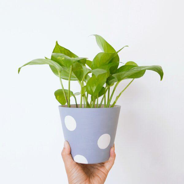 Pollyana (Violet) Planter