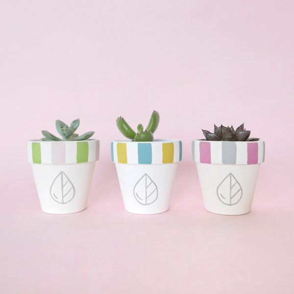 The Rain in Spain Signature Hand Painted Pots (logo & stripes)
