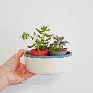 Zen dish with succulents