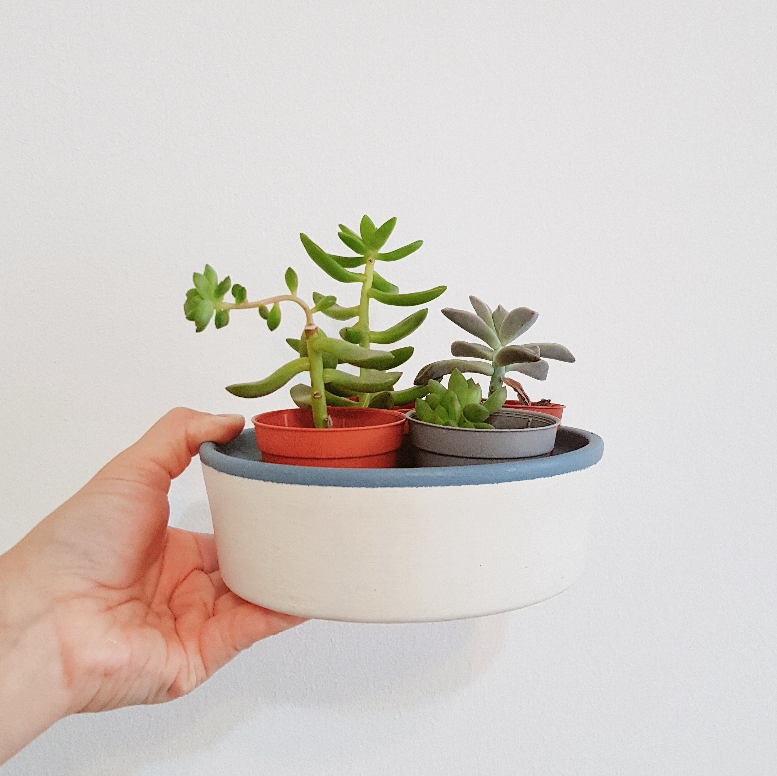 How To Water Succulents The Rain In Spain