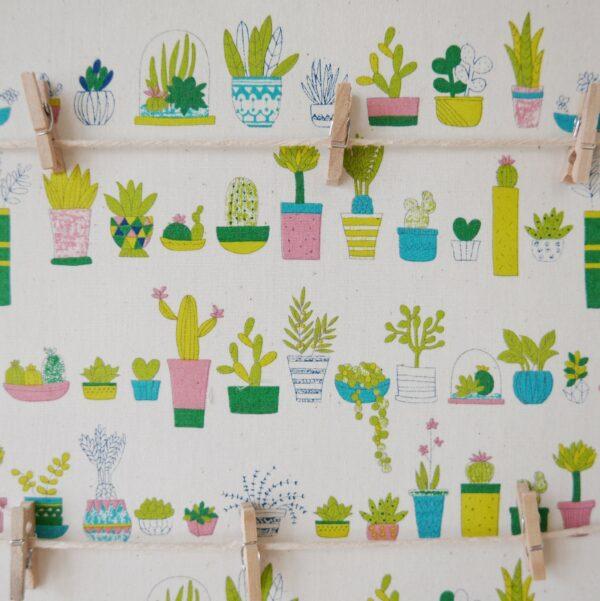 Plants that Pop close-up