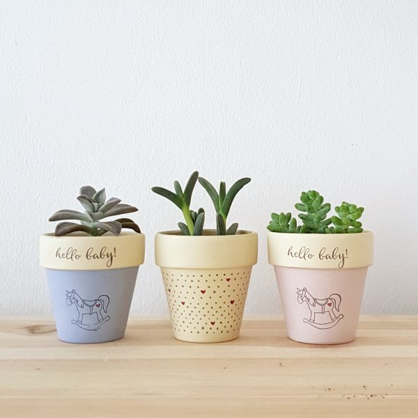 Hello Baby! and Dotty for you pots