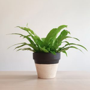 Drogon Plant Pot