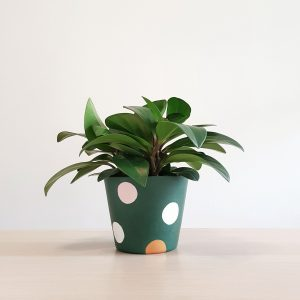 Pollyanna Forest Green Pot