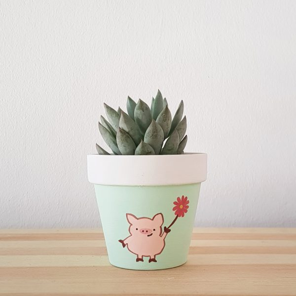 Positive Pig with succulent