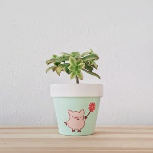 Positive Pig Pot with succulent