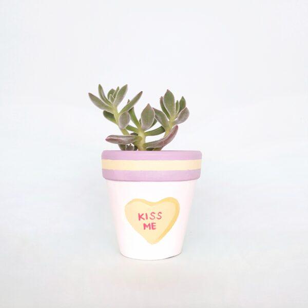 Kiss Me plant pot (with succulent)