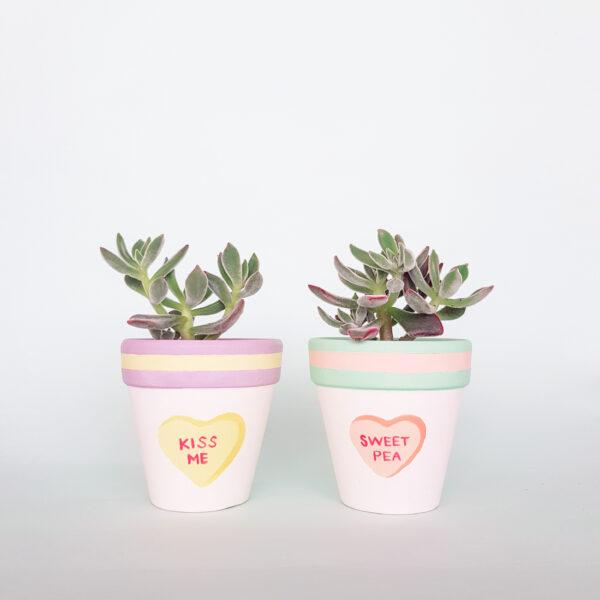 Kiss Me & Sweet Pea plant pots