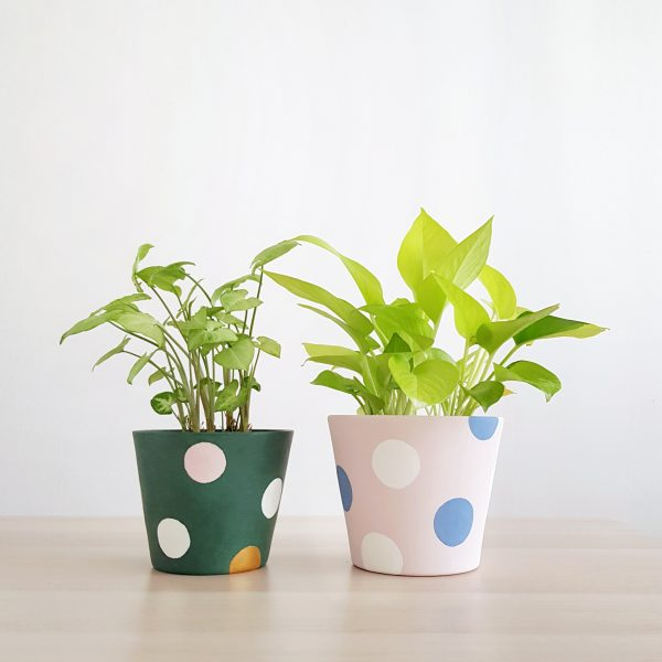 Pollyanna Pots (Forest Green & Powder Pink)
