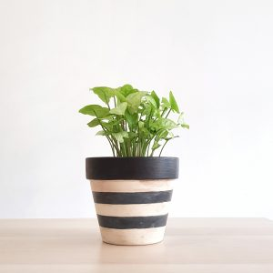 Zebra Pot