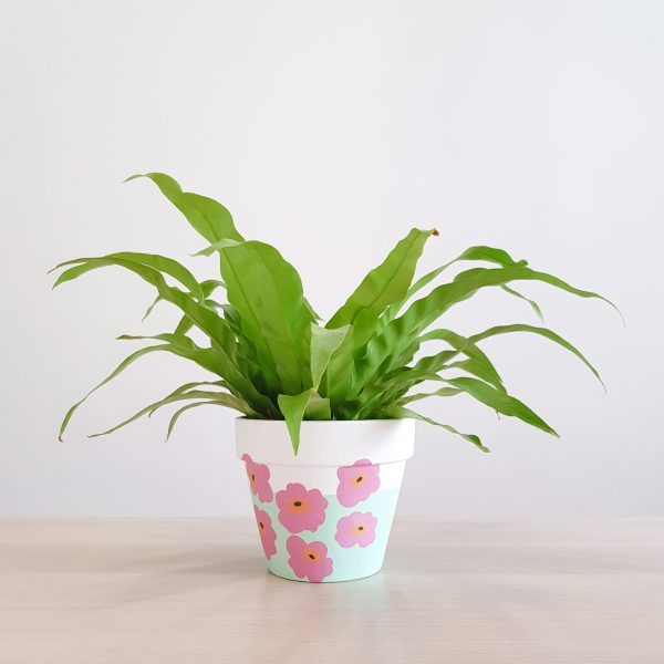 Marimekko (Pink Poppy) pictured with Bird's Nest Fern