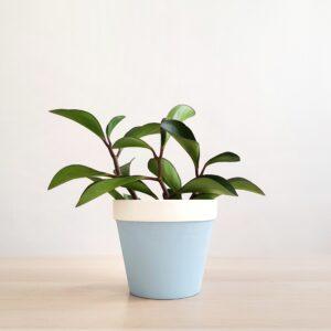 Aurora Plant Pot