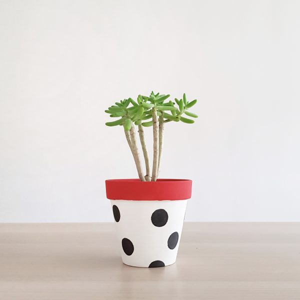 Disney Dots Plant Pot