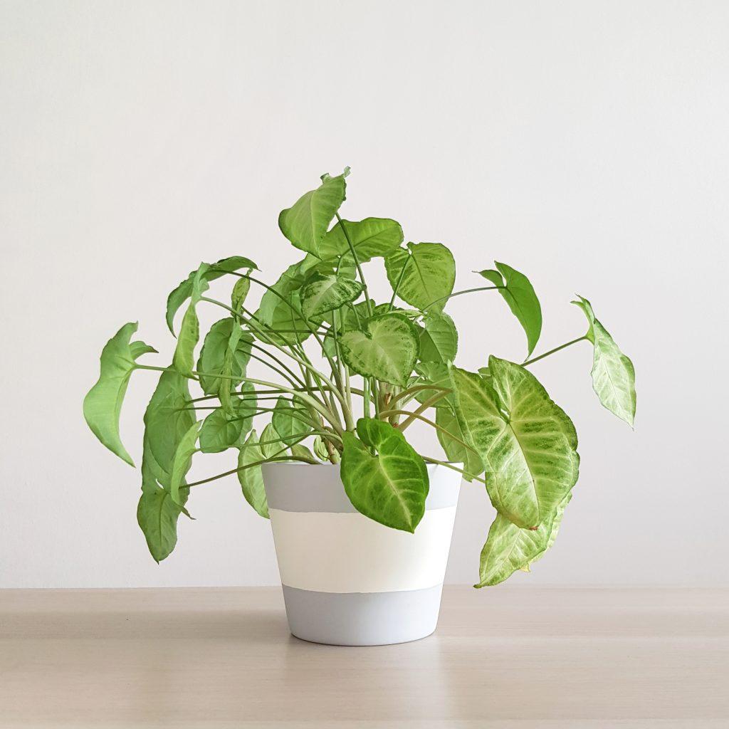 Rain Plant Pot (Med)