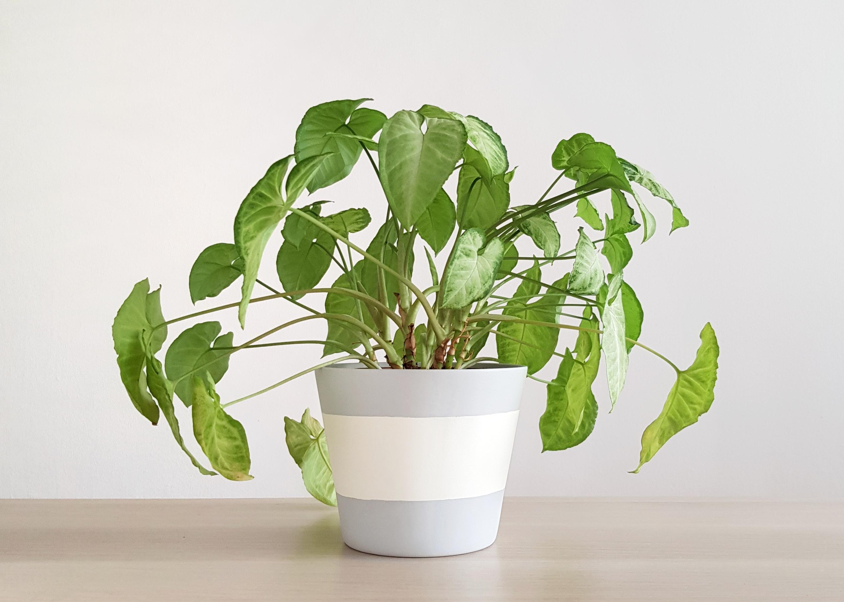 Rain Plant Pot
