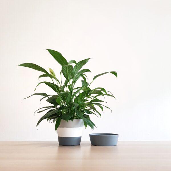 Rain II Pot and Matching Tray