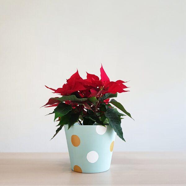 Pollyanna Pot (Snow Globes)